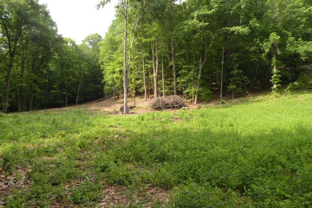 Clearcut and Thinning